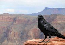 cria cuervos y te sacarán los ojos
